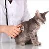 Ветеринарные клиники в Ижевске
